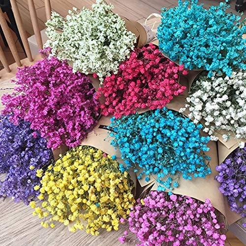 mymotto Blumensamen - 50 seltene Blumensamen Vergiss mich nicht Schneiden Blumensamen Garten Balkon Saatgut Myosotis Silvatica exotische winterharte Samen