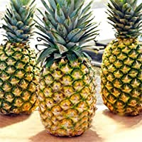 Ncient 100 Unids Semillas Piña Semillas Comestibles Frutas de Plantas Bonsai para Maceta Jardín Balcon Interior y Exteriores