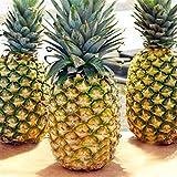 Ncient 100 Semi Sementi di Ananas Dolci Semi di Frutti Rari Semi di Fiori Profumati Piante per Orto Giardino Balcone Interni ed Esterni