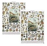 2fogli di lusso molluschi conchiglie carta da regalo Museums & Galleries
