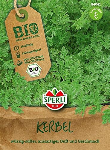 Kräutersamen - Bio-Kerbel Fijne Krul - Bio-Saatgut von Sperli-Samen