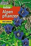 Ulmer Naturführer Alpenpflanzen (Ulmers Naturführer)
