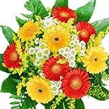 Echte Gerbera Blumen - Blumenstrauß Sommerzeit - z.B. als Geschenkidee, mit Frischegarantie