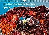 Schätze der Karibischen See (Wandkalender 2019 DIN A4 quer): Zauberhafte Momente der Unterwasserwelt um Curaçao (Monatskalender, 14 Seiten )