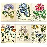Meishe Art Poster Print Vintage Blooming Blumen Botanischen Floral Pflanze Illustration Hortensie Tulip Home Wand-Dekor-Set von 6