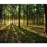 decomonkey Fototapete Wald 250x175 cm Tapete Wandbild Bild Fototapeten Tapeten Wandtapete Landschaft Baum Natur