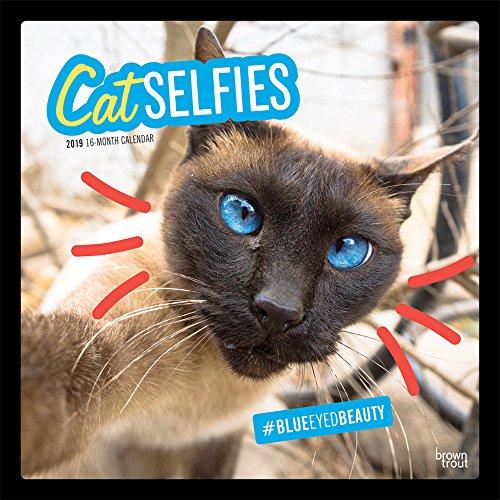 Cat Selfies - Katzenselfies - Katzen 2019 - 18-Monatskalender (Wall-Kalender)