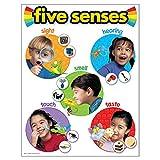 """Best Trend Enterprises Educational Toys - TREND enterprises, Inc. Five Senses Learning Chart, 17"""" Review"""