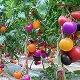 TOPmountain Regenbogen-Tomaten-Bonsai-Samen 100 Stück ungewöhnliche Gemüsesamen für die Gartenarbeit
