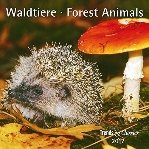 Waldtiere Forest Animals 2017