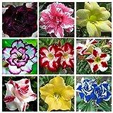 #7: M-Tech Garden 10 Seeds Hot Selling Adenium Obesum Desert Rose Mixed Varieties Genuine SeedsGZ-BN8P-3BL5