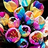 WuWxiuzhzhuo 5pz rare Rainbow Tulip lampadine semi di semi di fiori, beautiful Home Garden Plant 1