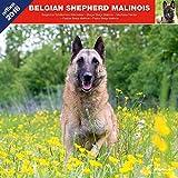 berger belge malinois 2018 calendrier affixe belgian shepherd