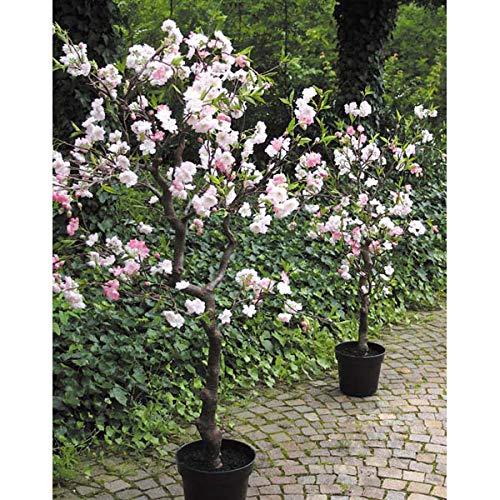 artplants Set 'Künstlicher Kirschbaum + Gratis UV Schutz Spray' – Kunstbaum Kirschblüten CHADIA, Kunststamm, Blüten, rosa, 120 cm