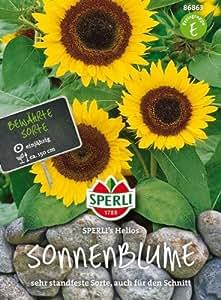 Sperli Sonnenblume SPERLI´s Helios