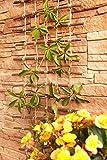 Pergola, graticolato in vimini cotti non trattati e corda di iuta, utile per piante ed animali, scaletta fiore, lunghezza: 200 cm, larghezza:50 cm immagine