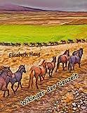 Wikinger der Neuzeit: Das Islandpferd