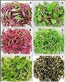 #9: Microgreens Seeds Combo - 6 types (Arugula, beet root, Coriander, Basil, Swiss Chard, Kale + Red Amaranthus free) Superb Seeds Selection 1000+ Seeds Combo by Raunak Seeds