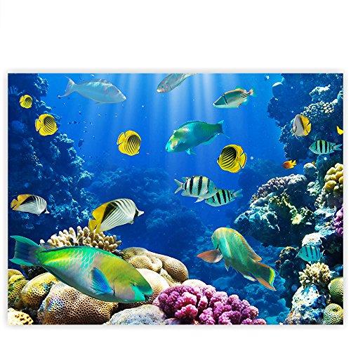 Doktorfische 1p Bild Bilder auf Leinwand Wandbild Poster