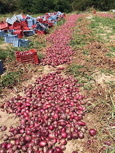 Zwiebeln von Tropea Kg. 2,5 - Angebot 5 Kg
