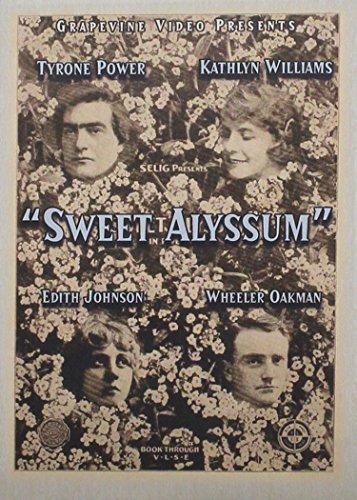 Sweet Alyssum (Sweet Alyssum)