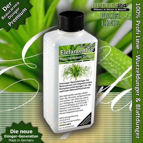 beaucarnea-ponytail-palm-elefante-arbol-de-pie-fertilizante-liquido-alta-tecnologia-npk-raiz-suelo-f