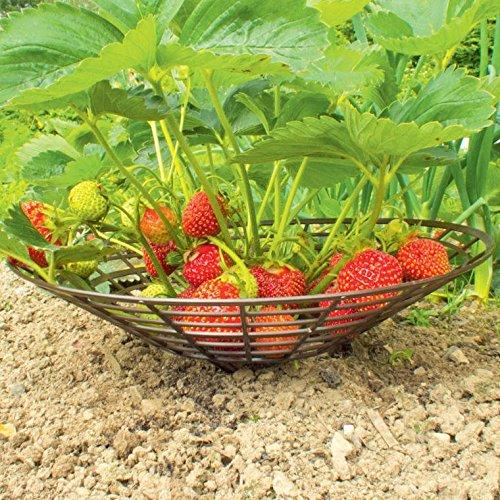 Erdbeer-Schutzunterlage Set aus 10