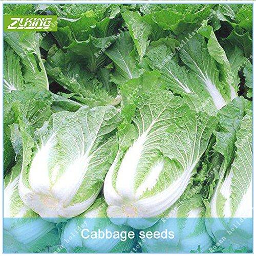 Galleria fotografica ZLKING 100 Pz verde cinese Cavolo Verdure Bonsai Seeds Fresh Organic nutriente facile da coltivare ortaggi naturali delle piante