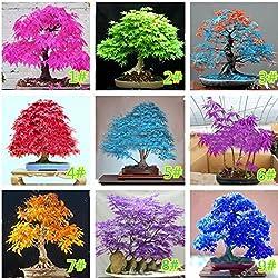 Edited Ahornsamen Bonsai Baumsamen 20Pcs bunte, Züchte dein eigenes Bonsai - Pflanzen Samen Balkon Ahorn Japanischer Ahorn-Baum für Mix Hausgarten - Einzigartige Geschenkidee (Dunkelblau)
