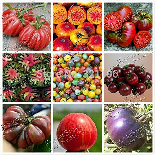 200 Mixed Tomatensamen, Bio-Heirloom, robust, hitzebeständig, reiches Aroma Blumensamen,