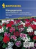 Sperli Blumensamen Hängegeranien Sommer Showers, F1, grün
