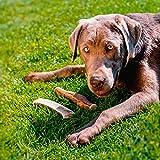 Larsson Geweih Hunde Kau-Snack – ELK-Schäufle IV - 4