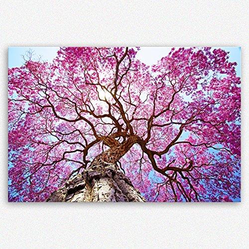 ge Bildet hochwertiges Leinwandbild XXL Pflanzen Bilder - Rosa Lapacho Baum in Pocone - Brasilien - Natur Baum Pink Lila - Premium Bild auf Leinwand 120 x 80 cm einteilig 2206 B (Bäume Bilder)