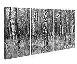 Leinwand 3tlg Birke Birkenwald Wald Baum Herbst schwarz weiss Bild Bilder Leinwandbild Leinwandbilder Holz fertig 9X1314, 3 tlg BxH:120x80cm (3Stk 40x 80cm)