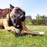 Rothirsch Geweihsnack Geweihstange für Hunde Gr XL 225-320gHirschgeweihe sind ein echtes, reines Naturprodukt 100% nachhaltige umweltbewusste und tierfreundlich