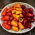 Paprika Mix (Snackpaprika) 30 Samen von Samenchilishop bei Du und dein Garten