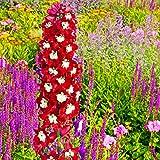 100pcs/bag Rittersporn Samen gemischt Consolida ajacis Delphinium Blumen Pflanze Rittersporn Bunte Rakete für den Heimgarten 2