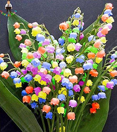 100Pcs Maiglöckchen Blumensamen Indoor Rare Bell-Orchidee Samen reich Aroma Bonsai Blumen-Samen nette und schöne Pflanzen - Schöne Pflanzen