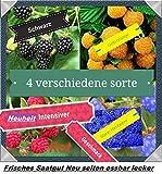 40x Himbeeren Mix Samen Saatgut Hingucker Pflanze Rarität essbar Himbeere