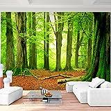 Fototapete Wald 352 x 250 cm - Vliestapete - Wandtapete - Vlies Phototapete - Wand - Wandbilder XXL - !!! 100% MADE IN GERMANY !!! Runa Tapete 9037011a