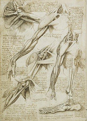 Vintage Anatomie LEONARDO da VINCI Studium des Armes und des Fußes, Italien, 14-15 Jahrhundert. 250 g/m², glänzend, Kunstdruck, A3, Reproduktion (Zahlen Diagramm Medizinische)
