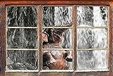 Stil.Zeit Babyelefant am Wasserfall B&W Detail Fenster im 3D-Look, Wand- oder Türaufkleber Format: 92x62cm, Wandsticker, Wandtattoo, Wanddekoration