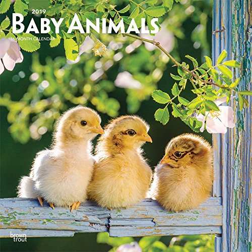 Baby Animals - Tierbabys 2019 - 18-Monatskalender (Wall-Kalender)