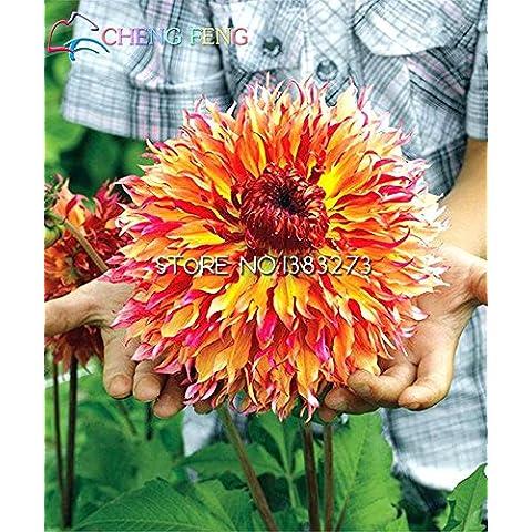 100 pc Semi di tipo ordinale giapponesi Dahlia Bulbi Semi Bonsai fiori delle piante da giardino Bella perenne fiore Bonsai economico Pot