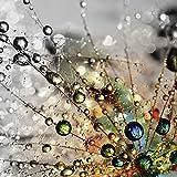 Artland Qualität I Glas Küchenrückwand ESG Spritzschutz Küche 60 x 60 cm Botanik Blumen Pusteblume Foto Bunt F1YG Farbenfrohe Natur