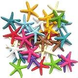 Muovst 30 piezas de decoración de estrella de mar, lápiz colorido de resina, decoración de estrella de mar y adornos de estrella de mar seco para boda, fiesta, Navidad, hogar y manualidades
