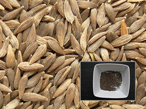 Laitue Feuille de Chêne Lattughino Verde - 70 graines - Lactuca sativa L. Convar. Incota Helm var. Crispa L. - Oak Leaf Lettice - SEM02