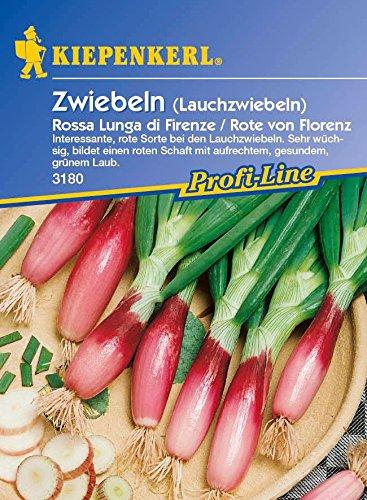 Lauchsamen – Lauchzwiebeln Rossa Lunga di Firenze/Rote von Florenz von Kiepenkerl