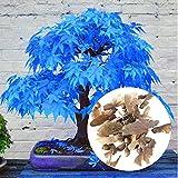 Rosepoem 20 pz / borsa importato acero rosso semi bonsai perenne cortile esterno fogliame piante in vaso giardino albero facile da coltivare