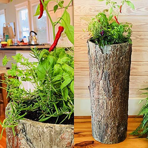 Buschy Box - Frische Kräuter-Garten-Pflanzgefäß für Küche und Balkon - Vintage-Stil, für den Innen- und Außenbereich - Garten Frische Kräuter